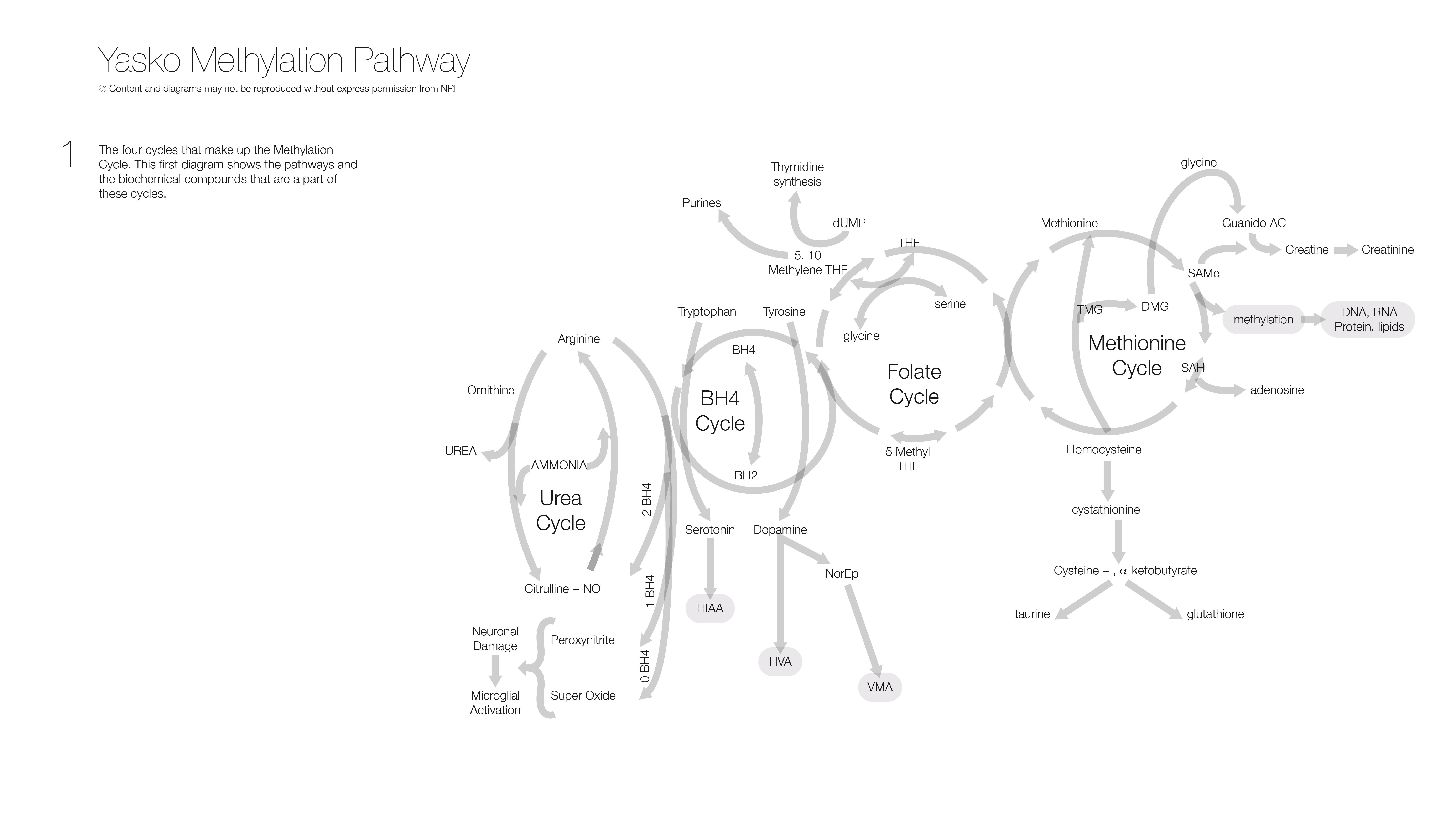 Yasko Methylation Pathway - 1