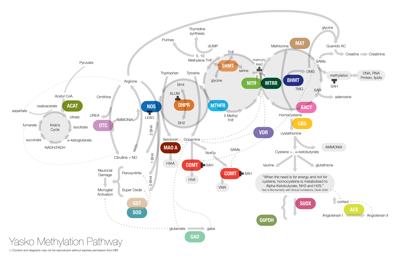 Yasko Methylation Pathway